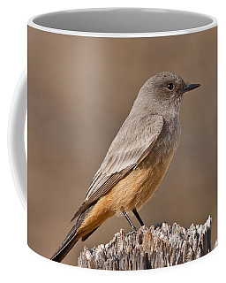 Say's Phoebe On A Fence Post Coffee Mug