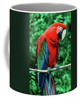 Scarlet Macaw Ara Macao Coffee Mug