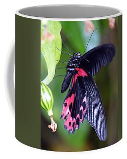 Scarlet Mormon Coffee Mug