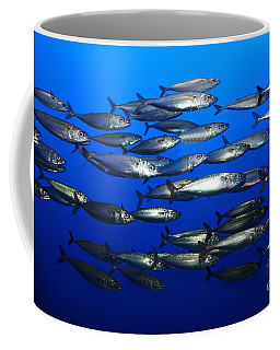 School Of Pacific Sardines 5d24927 Coffee Mug