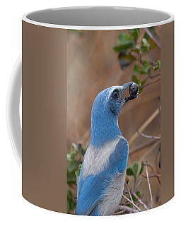 Coffee Mug featuring the photograph Scrub Jay With Acorn by Paul Rebmann