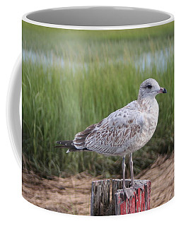 Coffee Mug featuring the photograph Seagull by Karen Silvestri