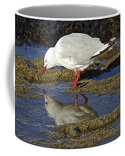 Seagull Reflections Coffee Mug by Venetia Featherstone-Witty