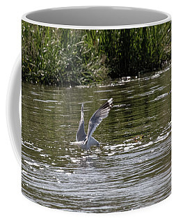 Coffee Mug featuring the photograph Seagull Searching Food by Leif Sohlman