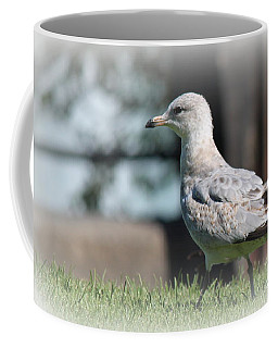 Seagulls 1 Coffee Mug