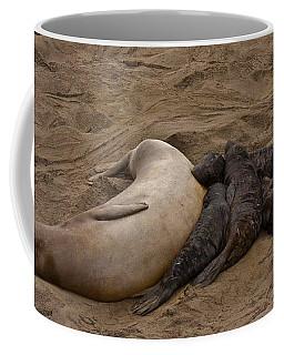 Seal And Pups Coffee Mug