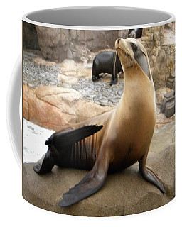 Coffee Mug featuring the photograph Seal In The Spotlight by Amanda Eberly-Kudamik
