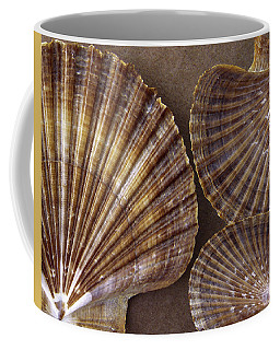 Seashells Spectacular No 7 Coffee Mug