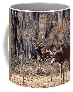 Coffee Mug featuring the photograph Seeing Double by Jim Garrison