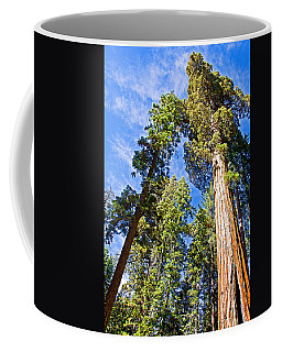Sequoias Reaching To The Clouds In Mariposa Grove In Yosemite National Park-california Coffee Mug by Ruth Hager