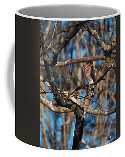 Coffee Mug featuring the photograph Sharp Shinned Hawk by Mim White