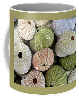 Shells 5 Coffee Mug