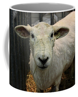 Shorn Sheep Coffee Mug by Joseph Skompski