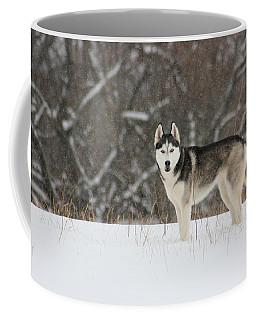 Coffee Mug featuring the photograph Siberian Husky 20 by David Dunham