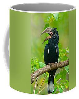 Silvery-cheeked Hornbill Perching Coffee Mug