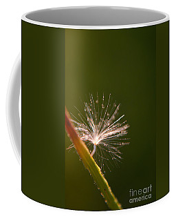 Simpliest Beauty Coffee Mug