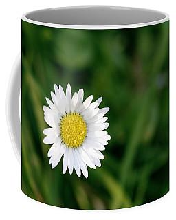 Single Daisy With A Green Background Coffee Mug