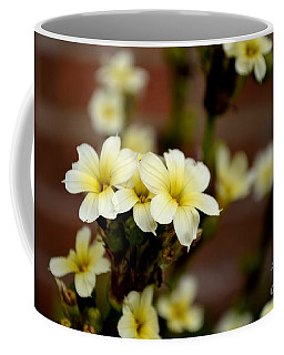 Sisyrinchium Striatum Coffee Mug