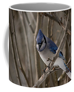 Coffee Mug featuring the photograph Sitting Pretty by David Porteus