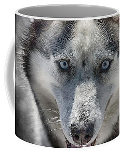 Coffee Mug featuring the photograph Sled Dog  by Dennis Baswell