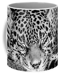 Coffee Mug featuring the photograph Sleeping by Steven Santamour