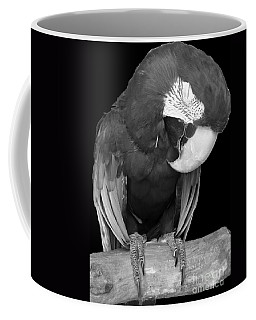 Sleepy Bird  There Is A Nap For That B And W Coffee Mug by Barbie Corbett-Newmin