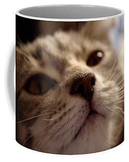 Sleepy Kitten Coffee Mug