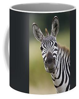 Smiling Burchells Zebra Coffee Mug
