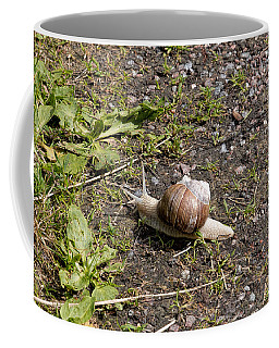Coffee Mug featuring the photograph Snail by Leif Sohlman