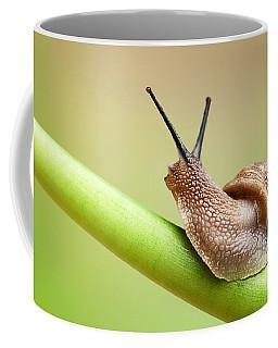 Snail On Green Stem Coffee Mug
