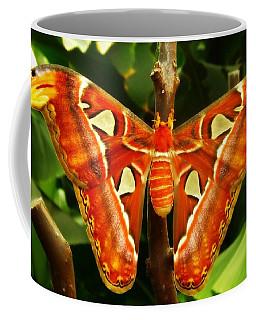 Snake Head Coffee Mug by Clare Bevan