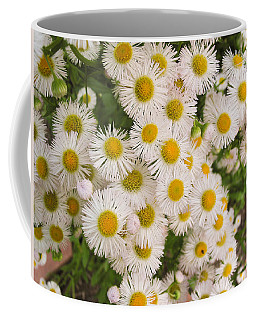 Snow White Asters Coffee Mug