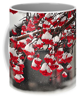 Coffee Mug featuring the photograph Snowy Mountain Ash Berries by Fran Riley