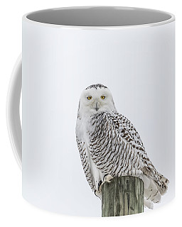 Snowy Owl 2014 1 Coffee Mug