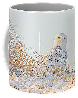 Snowy Owl In The Snow Covered Dunes Coffee Mug