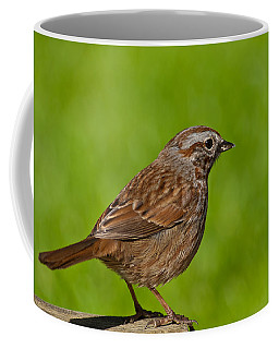 Song Sparrow On A Log Coffee Mug by Jeff Goulden