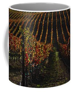 Sonoma Vineyard Rows Coffee Mug