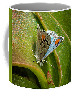 Coffee Mug featuring the photograph Sonoran Blue by Jim Thompson