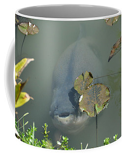 #south American Pacu Coffee Mug
