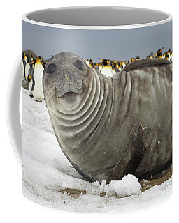 Coffee Mug featuring the photograph Southern Elephant Seal Weaner by Yva Momatiuk John Eastcott