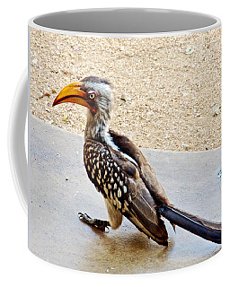 Southern Yellow-billed Hornbill In Kruger National Park-south Africa Coffee Mug
