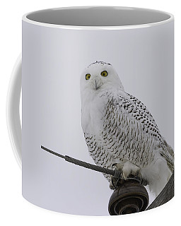 Special Owl Coffee Mug