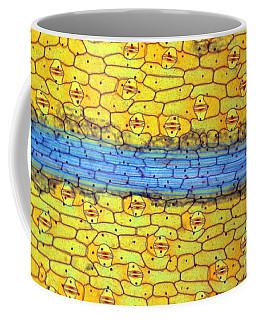 Spider-wort, Leaf Section Coffee Mug