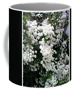 Coffee Mug featuring the photograph Spirea Bridal Veil by Barbara Griffin