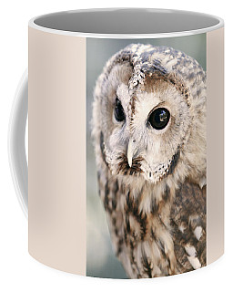 Coffee Mug featuring the photograph Spotted Owl by Shoal Hollingsworth