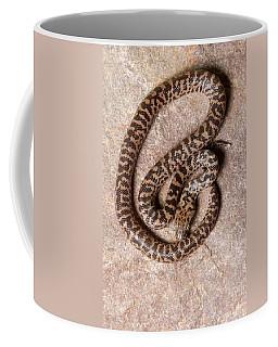Spotted Python Antaresia Maculosa Top Coffee Mug