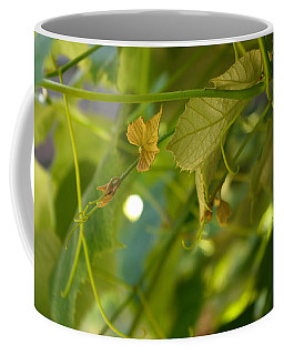 Coffee Mug featuring the photograph Spring Green Grape Vines by Adria Trail