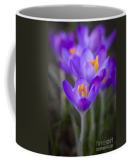 Spring Has Sprung Coffee Mug by Clare Bambers