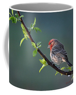 Song Bird In Spring Coffee Mug