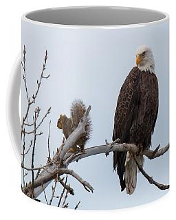 Squirrel Gets Perilously Close To A Bald Eagle Coffee Mug